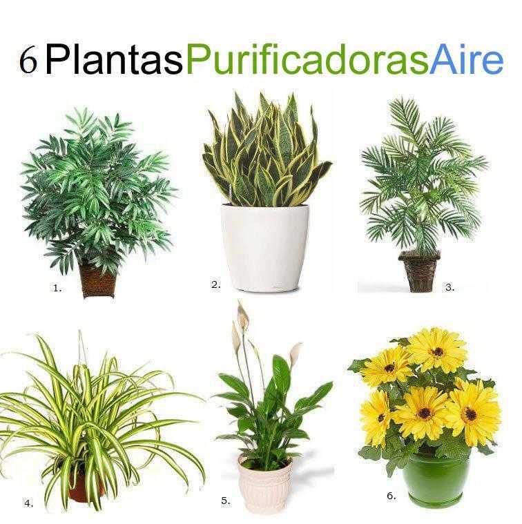 6 plantas de interior que purifican el aire
